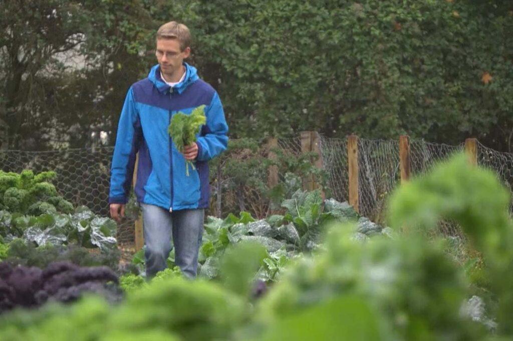 C. Hahn in blauer Regenjacke umgeben von groß wachsendem Grünkohl