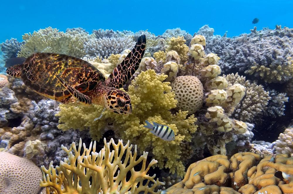 Korallenriffe am Great Barrier Reef